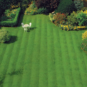lush, green, manicured lawn as seen from high above