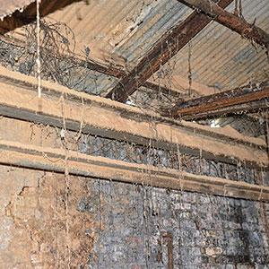 black mold in an attic