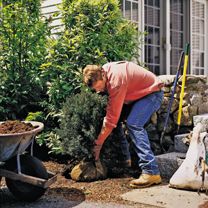Roger Cook bending over to do gardening