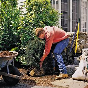 Roger Cook bending over to do gardening