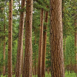 how engineered wood saves trees