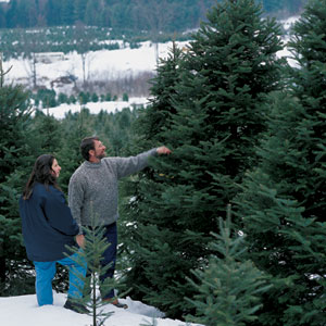 This Old House master carpenter Norm Abram and his daughter, Lindsey, make their annual pilgrimage to the Christmas tree farm.