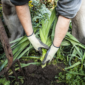 person using gardening gloves to keep clean while working on landscaping