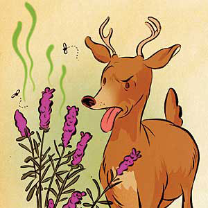 landscaping around your home with plants that deer's dislike is your best defense