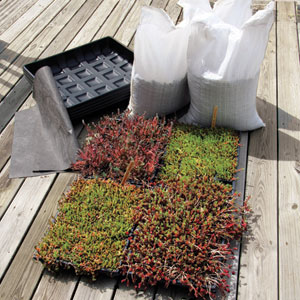 a kit to grow your own green roof
