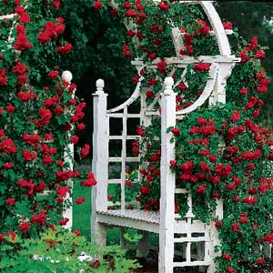 rose vines