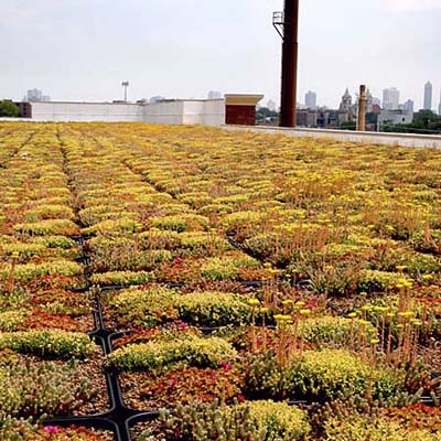 green rooftop of Kohl's retailer in Chicago
