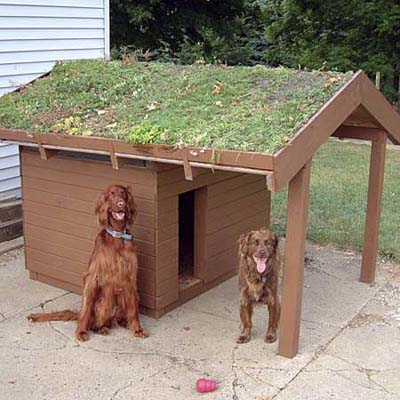 a green roof dog shelter