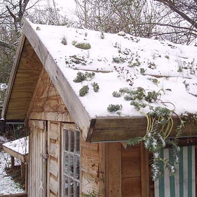 moss sedums are great for snow covered roofs