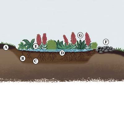 rain garden anatomy