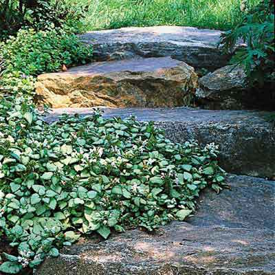 flower beds on stone edges