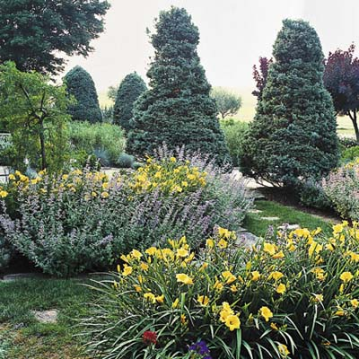 the arching foliage and yellow trumpets of the daylilies and the soft blue spires of the catmint combine for a dynamic pairing