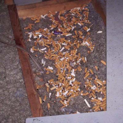 cigarette butts strewn on top of insulation