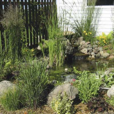 backyard pond with plantings