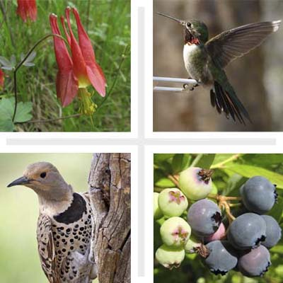 Plants for Backyard Birds