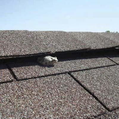 toad sticking out from between roof shingles