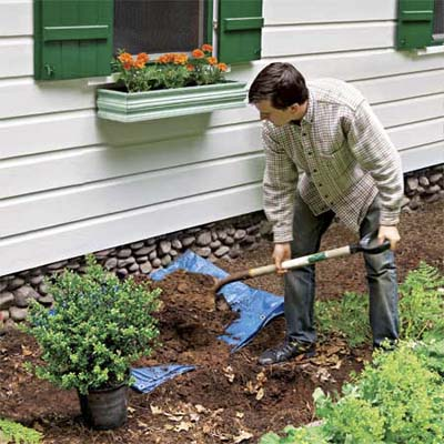man planting a dwarf shrub to help protect his home's foundation