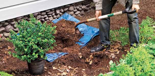 man planting dwarf shrubs to protect his foundation