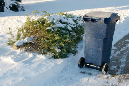 christmas tree lying in the snow next to a garbage can