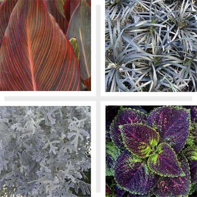 colorful, leafy garden plants, including canna 'Phasion' and coleus