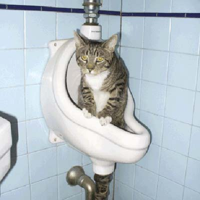 cat in the urinal