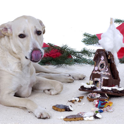 dog eating chocolate gingerbread house