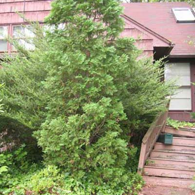 house covered by overgrown bush