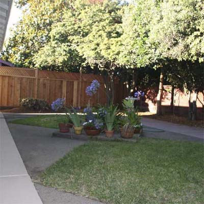 backyard with diamond shaped grass plots