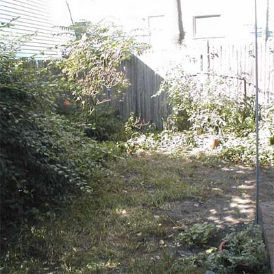 overgrown backyard
