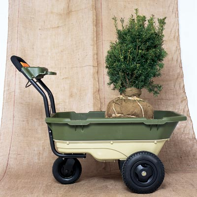 wheelbarrow holding small pine tree