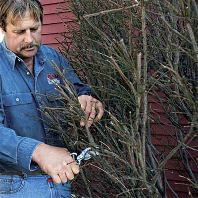 person clipping dead or damaged branches as part of spring upkeep