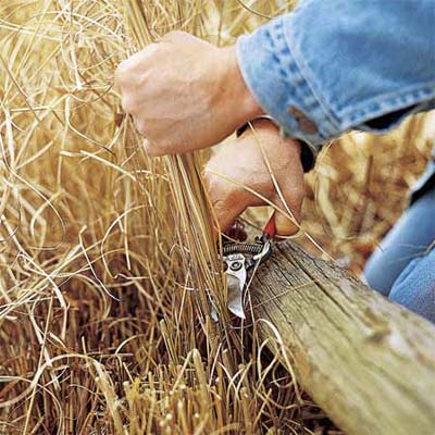 hands pruning dead grass