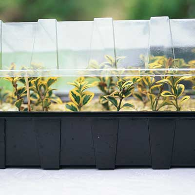 miniature greenhouse for plant propagation