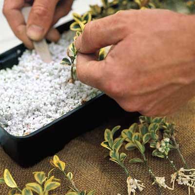 plant propagation process