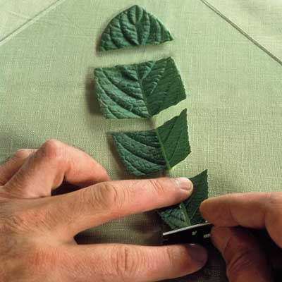 hands cutting leaf with a razor blade