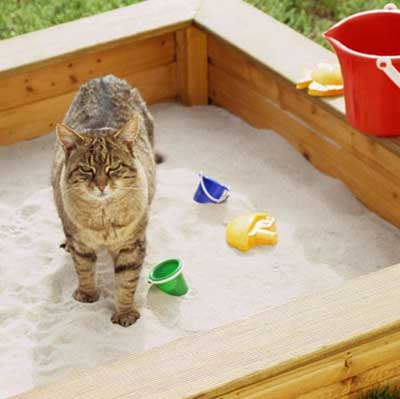cat in kids outdoor sandbox