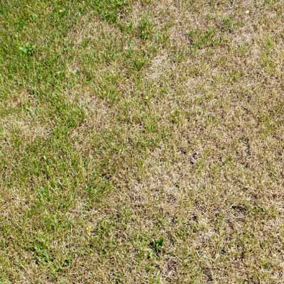 brown areas and dry spots in lawn