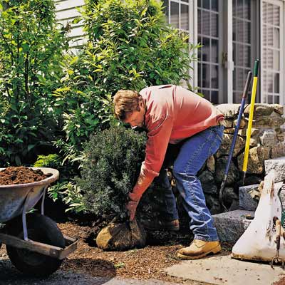roger cook planting new shrubs for fall yardwork