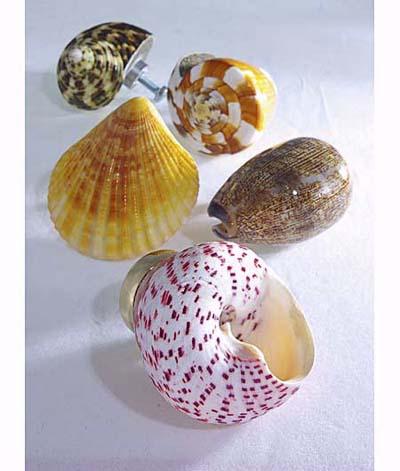 shell pulls