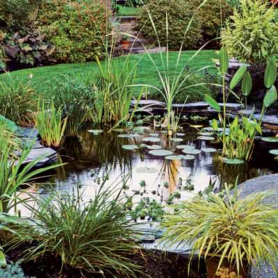All about ponds everything you need to know to build the for Making a garden pond