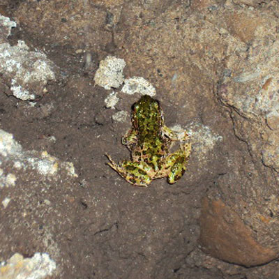 frog in a leaky crawl space