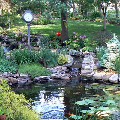 a backyard pond in St. Louis, Missouri