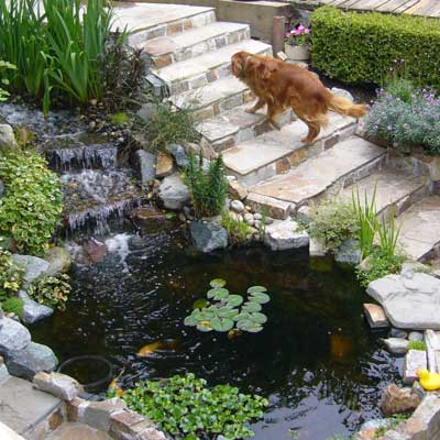 a backyard pond in Kenmore, Washington