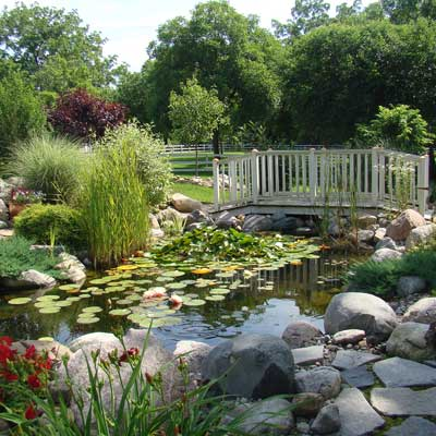 a backyard pond in Monroe, Michigan