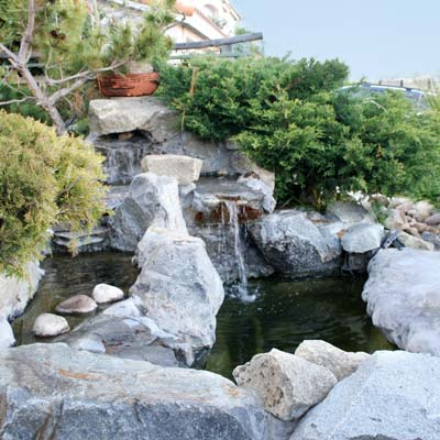 a backyard pond in San Diego, California