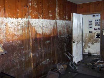 mold from Katrina flooding