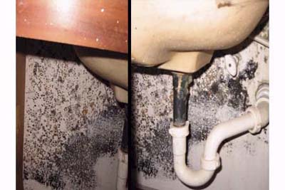 mold under the sink