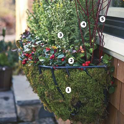 Choose a cold hardy container cold weather plantings for Best windows for cold climates