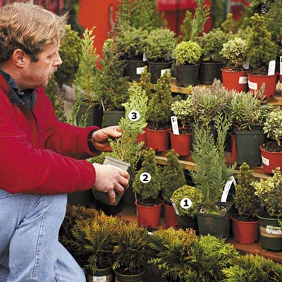miniature plants good for cold weather