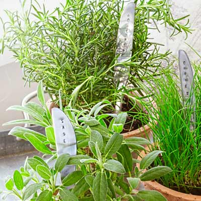 stamped butter knives used as plant markers in potted plants